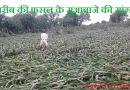 सुरतपुरा गाँव में खरीब की फसल को भारी नुकसान: मुवावजा की बात को नही मान रही है सरकार