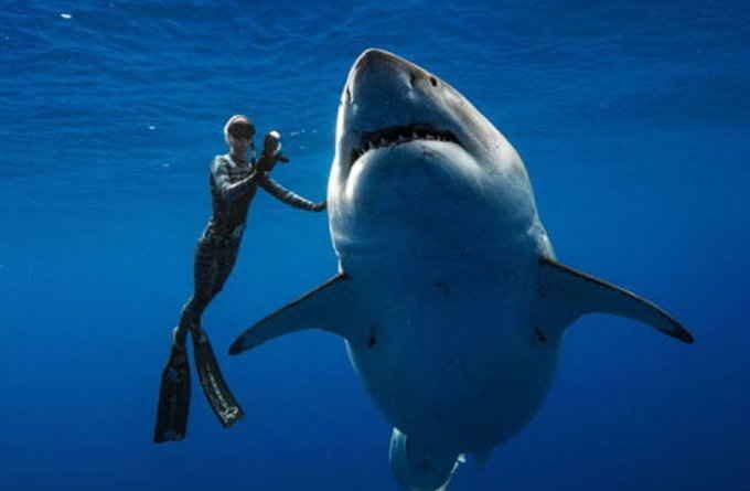 हवाई तट पर दिखी दुनिया की सबसे बड़ी सफेद शार्क मछली, इसकी लंबाई 20 फीट और वजन 25 क्विंटल