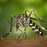Dengue fever Symptoms and Treatment