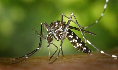 Dengue fever Symptoms and Treatment
